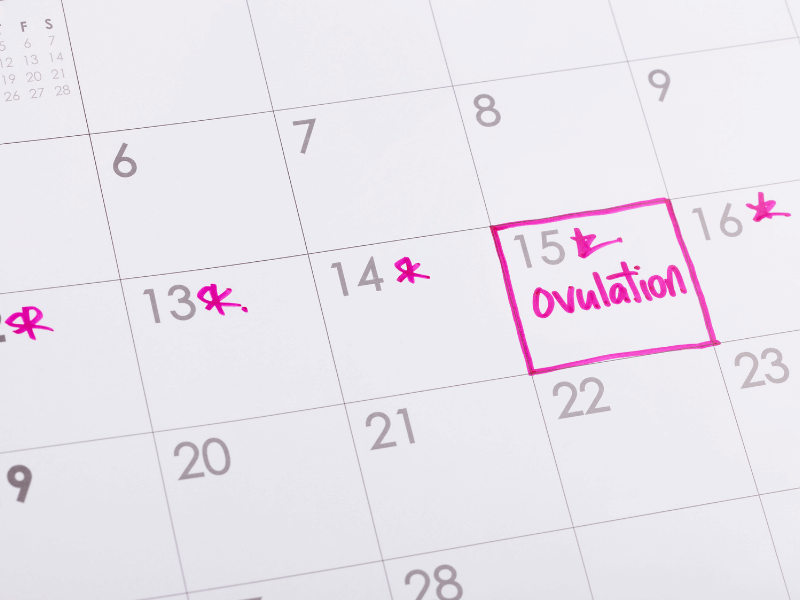 Calendar showing date of ovulation